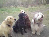 <h2>Jake & Mac met their friends out on our walk